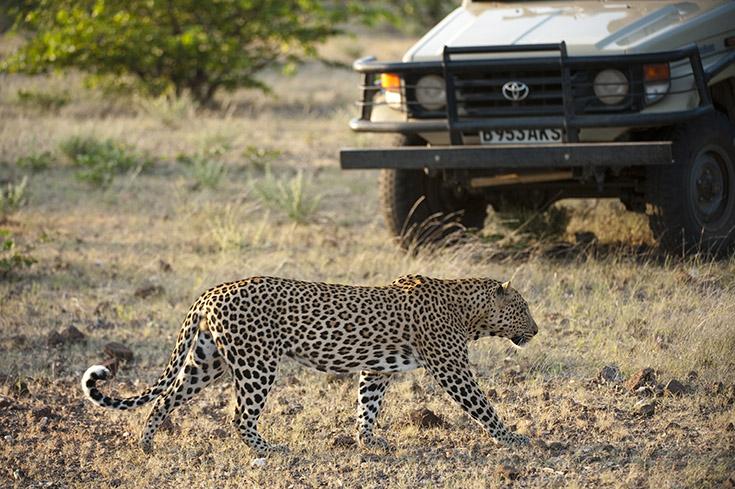 BO-TU-leopard-10-0050