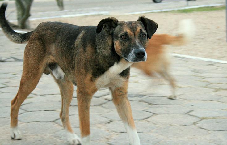 Street_Dog_Pelotas