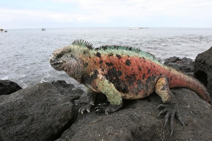 De Galapagos-eilanden