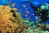 Prachtige duikplekken: 4x Onderwaterweelde
