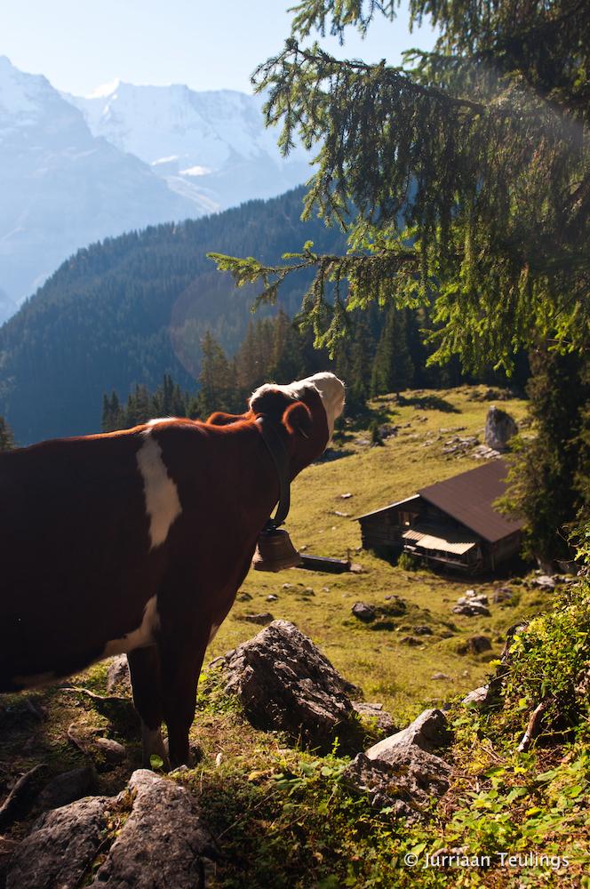 Nazomeren in Zwitserland