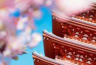 Tokyo ontdekken als een local