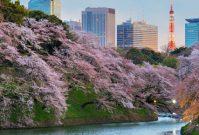 Op bezienswaardigheden-tour door Tokyo