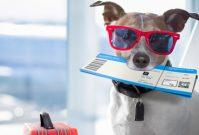Met je hond in het vliegtuig