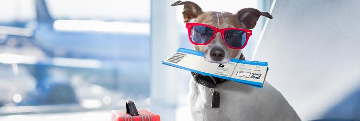 Met Je Hond In Het Vliegtuig Alles Over Reizen Met Huisdieren Op