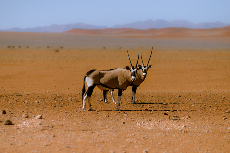 Namibië: Grandioze Woestenij